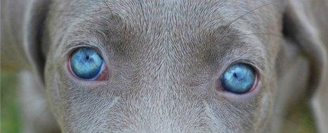 Dogs and some primates have molecues that might let them perceive magnetic fields   physique quantique et science du réel   Scoop.it