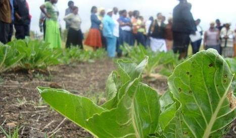 Johannesburg: Organic farming for everyone | Sustainable Cities | (Culture)s (Urbaine)s | Scoop.it