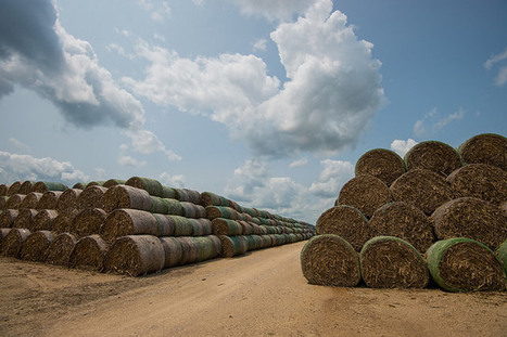 Advanced Biofuels Power Up Amid Resistance | Science, Technology, and Current Futurism | Scoop.it