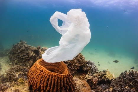 How do we keep the oceans from becoming the world's plastic trash can? | Marine Conservation Research | Scoop.it