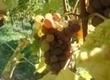 Route des Vins de Cahors | Mon Vigneron, oenotourisme en France | Wine and Co | Scoop.it