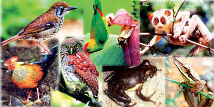 Endemic Animals of Sri Lanka - A haven for the creatures of Indian Subcontinent | The Vacation Gateway | My favourite | Scoop.it
