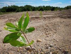 Forest landscape restoration: a solution to global challenges | Agricultural Biodiversity | Scoop.it