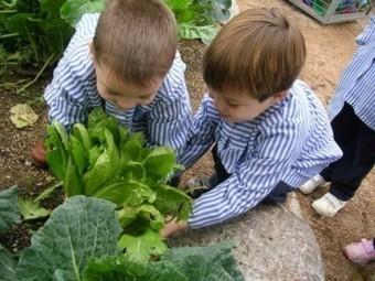 Conciencia ecológica: los huertos escolares ecológicos - | Agua | Scoop.it