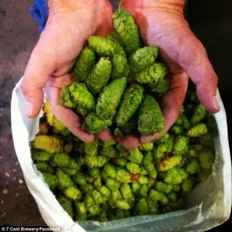 Craft brewery makes beer from BELLY BUTTON fluff | Homebrewing, craft beer | Scoop.it
