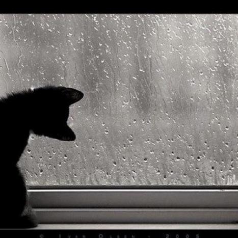 Il verbo piovere vuole l'ausiliare essere o ave...   Imparare l'italiano   Scoop.it