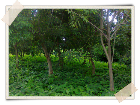Agroforestry: The Art of Farming With Trees | Agricultural Biodiversity | Scoop.it
