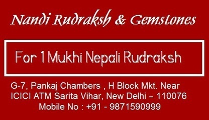 1 mukhi nepali rudraksha in South Delhi,Delhi/NCR | DealGali | Best Gemstone Seller in Delhi | Scoop.it