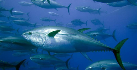EUROPEAN UNION: Highlights of the agreement on the reform of the Common Fisheries Policy | BUSINESS DEVELOPMENT | Scoop.it