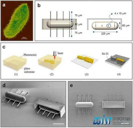 World's first ciliary microrobots could change the way we take medicine | Robots and Robotics | Scoop.it