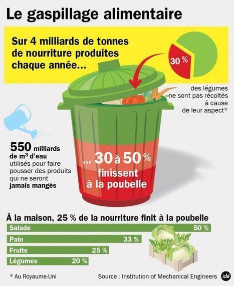 Infographie du jour : 50% de la nourriture mondiale à la poubelle | infographie | Scoop.it