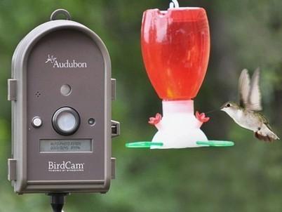 Bird Watching Camera | Porch, Patio and Outdoor Decor | Scoop.it