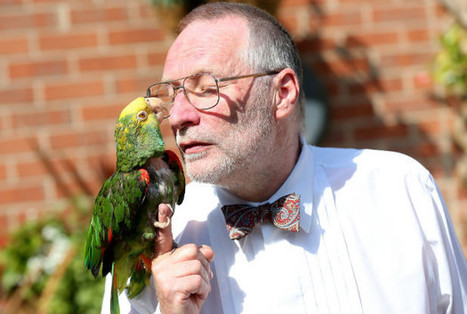 Drinkers raise a glass at Sammy the parrot's 50th birthday party | All Things Zygodactyl | Scoop.it