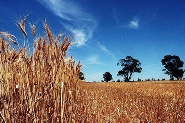 Indian wheat exports to continue - Queensland Country Life | Agricultural & Horticultural Industry News | Scoop.it