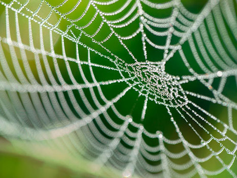 Biomimicry's growing web of opportunity | Smart Sustainable Cities | Scoop.it