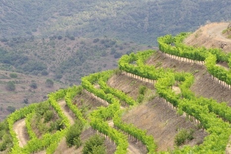 Visiting Torres, an important wine producer in Spain, part 3, Priorat | Wine website, Wine magazine...What's Hot Today on Wine Blogs? | Scoop.it