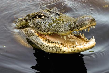 Nadie podrá usar un logotipo con un cocodrilo | Marketing & Social Media | Scoop.it