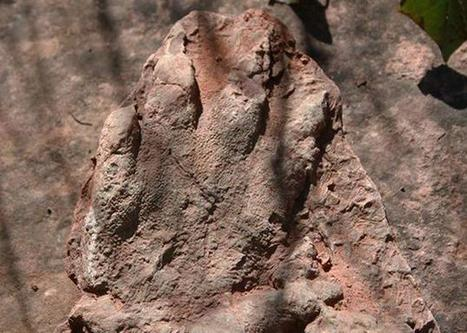L'empreinte d'un dinosaure a été retrouvée en Espagne | Aux origines | Scoop.it