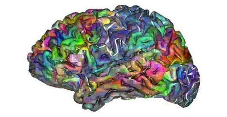Semantic Maps Revealed On The Cerebral Cortex | Co-creation in health | Scoop.it