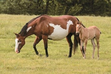 Parasite Control Recommendations for Mares and Foals | Equine Reproduction | Scoop.it