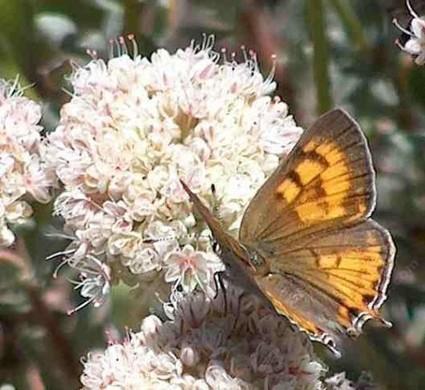 Last Stand of Summer in the CA Wildlife Garden | Annie Haven | Haven Brand | Scoop.it