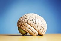 Brain Aging May Depend on Childhood Intelligence | TIME.com | Edu's stuff | Scoop.it