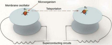 Physicists propose new method to teleport the memory of a living creature | Scinnovation | Scoop.it