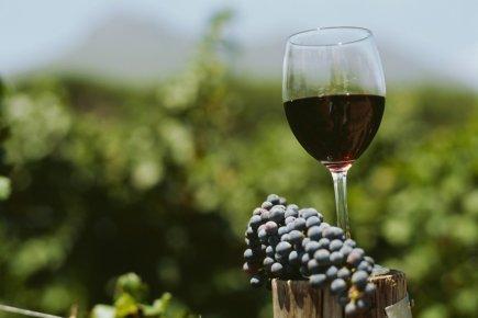 Le vin bio existe-t-il? | Ma Cave En France | Scoop.it