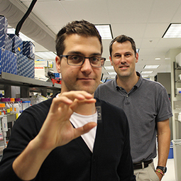 """""""Tumor-on-a-Chip"""" Assists Nanotechnology Research   The Future of Information Technology   Scoop.it"""