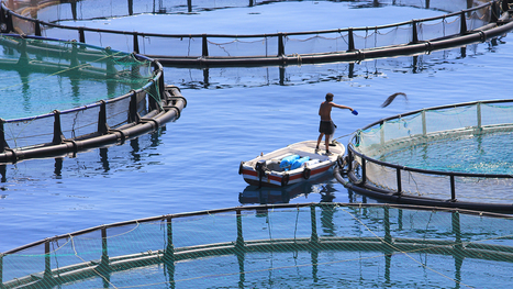 Cleaning Up The Farmed Fish Industry | The Water Steward | Scoop.it