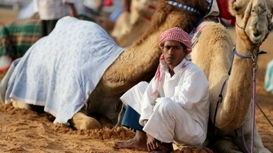 MERS virus from camels and humans called indistinguishable | MERS-CoV | Scoop.it