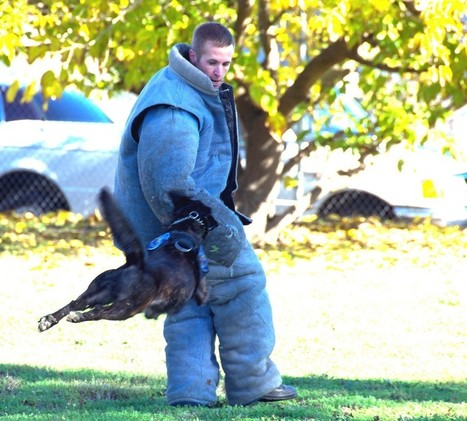 Police K9 competition open to public | Pet Sitter Picks | Scoop.it