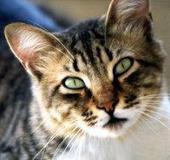 Guidelines for Cats | Cat Stuff | Scoop.it