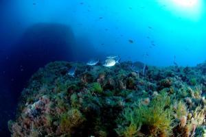 #Fish population #recovery in #MarineReserve, started 25yrs ago. #MedesIslands | Rescue our Ocean's & it's species from Man's Pollution! | Scoop.it