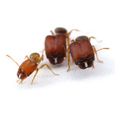 Scientists Make Supersoldier Ants | All About Ants | Scoop.it