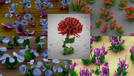 Crystal 'flowers' bloom in Harvard nanotech lab | New and emerging careers | Scoop.it
