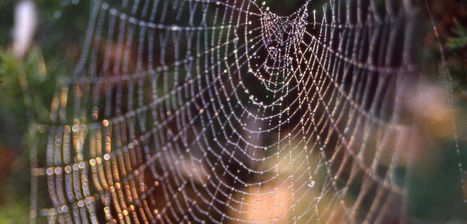 """Spiders know the meaning of """"web music"""" made by vibrations of entangled prey, wind and mates 