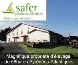 Guy Estrade, élu président de la Chambre d'agriculture des Pyrénées-Atlantiques - Aqui.fr | Agriculture Aquitaine | Scoop.it