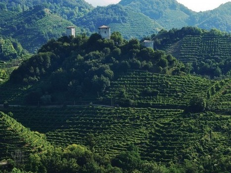 Is the Prosecco bubble about to burst? | Grande Passione | Scoop.it