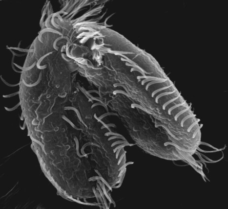 This Bizarre Organism Builds Itself a New Genome Every Time It Has Sex   Weird Science   Scoop.it