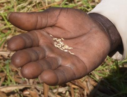 La grande majorité des pauvres vivent de l'agriculture… et vice-versa | Questions de développement ... | Scoop.it