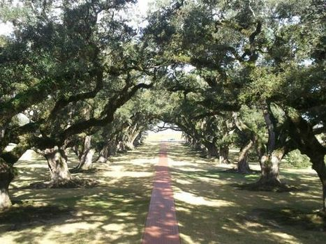 Christopher @ Oak Alley Plantation   Oak Alley Plantation: Things to see!   Scoop.it