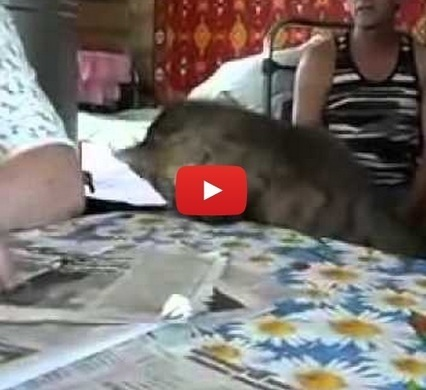 "22 Words | Cat uses sign language to say ""Pet me"" 