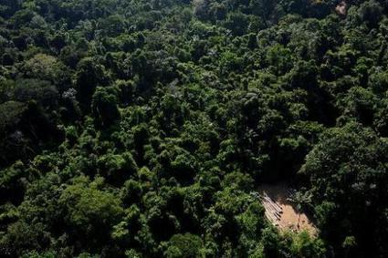 Brazil builds giant tower in Amazon to monitor climate   Sustain Our Earth   Scoop.it