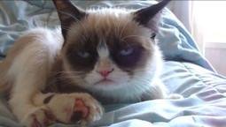 Video: Sleepy Grumpy Cat - Socks On An Octopus | SOAO Funny and Unusual | Scoop.it