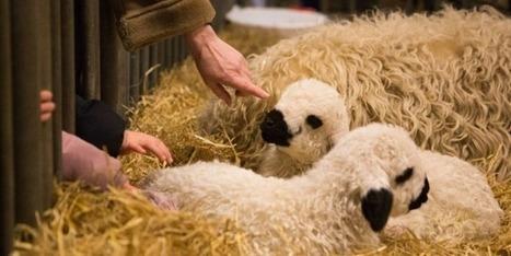 Pour Hollande, les animaux doivent rester des biens meubles | Nature Animals humankind | Scoop.it
