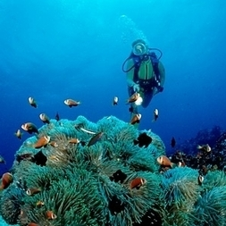 Men's Journal's Best Places to Go #Scuba Diving | Ban Shark Finning!!!! | Scoop.it