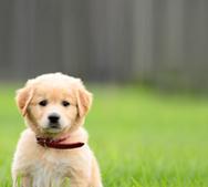 Pets for Sale | Sell Pets Online | Animals for Sale Australia | Pets - Buy Pets Online | Scoop.it