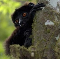 Scientists Discover a New Understanding of Why Female Primates Outlive Males | wildlife | Scoop.it