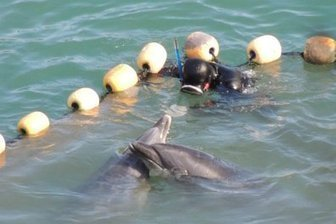 Challenge Japan to END Taiji Dolphin Hunt for Tokyo 2020 Olympic bid | Nature Animals humankind | Scoop.it